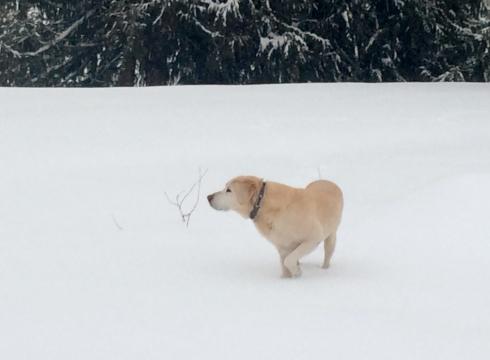 Farm Dog in the Snow