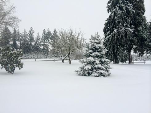 Snowy Oregon Farm