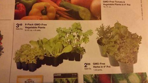 gmo free plants