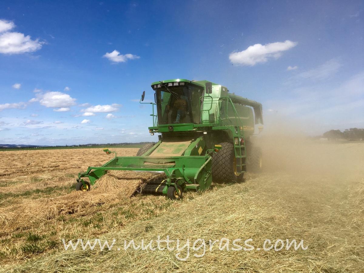 Photo Friday, Grass SeedHarvest